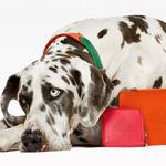Móda pre psíkov od Mulberry – pozrite sa!
