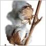 Zoznámte sa s bavlnárskymi tkaninami