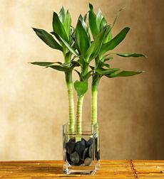 Dekoračné rastliny do bytu
