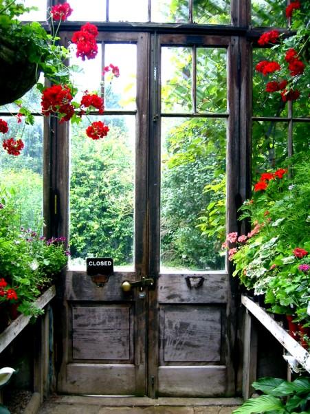 Zimná záhrada s muškátmi