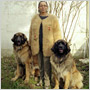 Novým módnym hitom je sveter z vlastného psa – upleťte si ho!