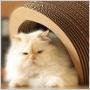 Aj vaša mačka ocení módny štýlový peliešok alebo toaletu