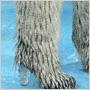 V kolekcii topánok Chanel môžete vyraziť napríklad na výlet za ľadovými medveďmi - maskovanie budete mať dokonalé!