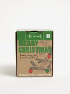 Súprava na vypestovanie vianočného stromčeka Gift Republic Grow me